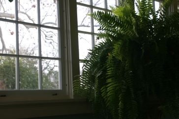 Ferns at Breakfast