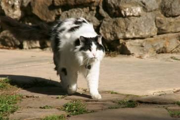Mission Cat